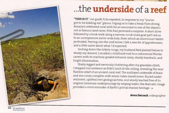 Bonaire cave article