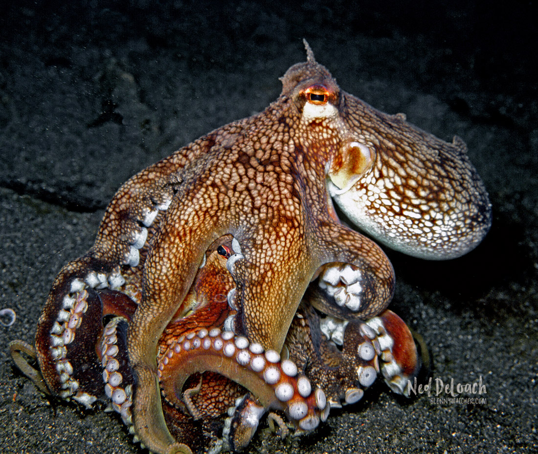 Coconut Octopus trying to steal food from the other.