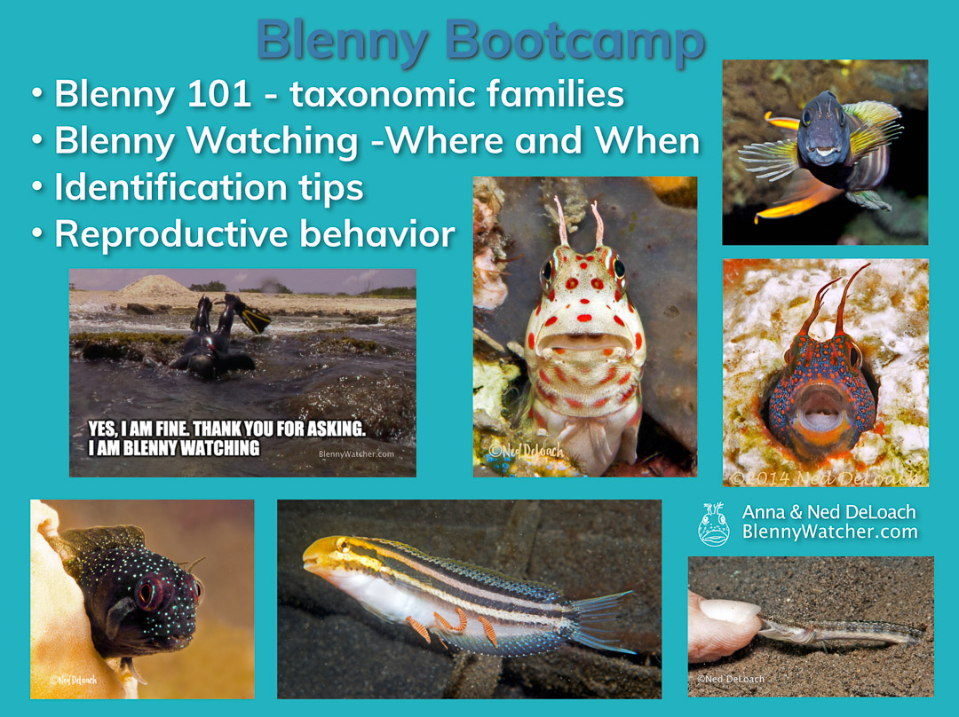 Blenny Bootcamp